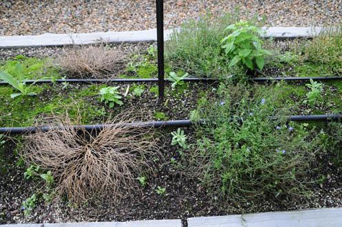 Trial Garden Youngs Plant Farm
