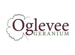 Oglevee Geranium