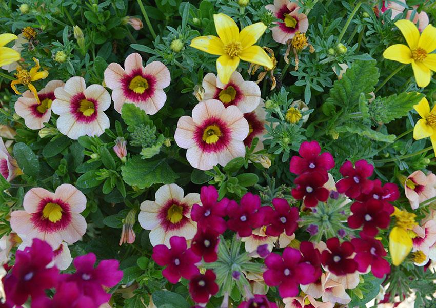 Confetti Garden Fleur De Edna