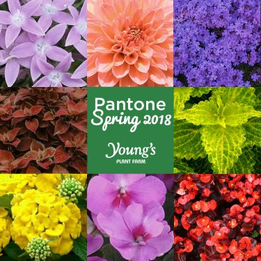 Youngs_SpringPantone_FBTW